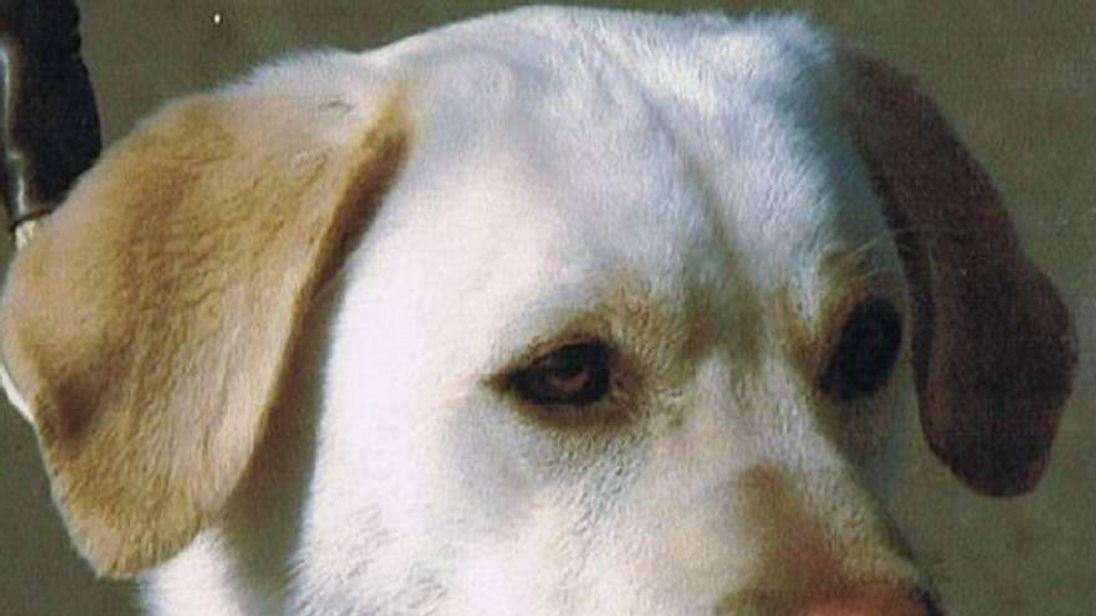 Highest award for army dog Sasha