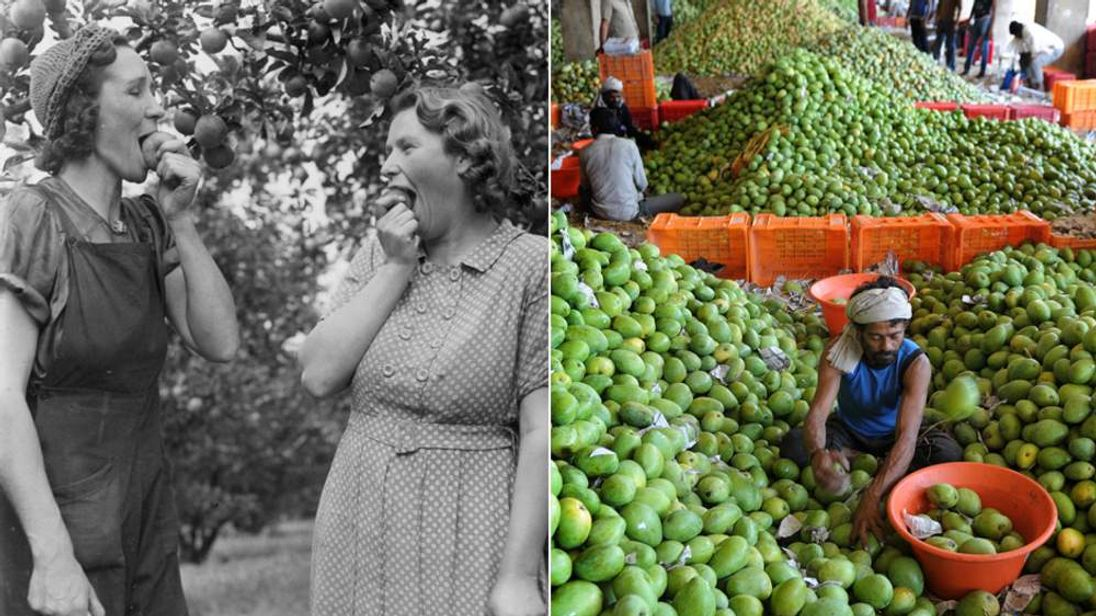 Apples from Kent: yes, imported mangoes: no