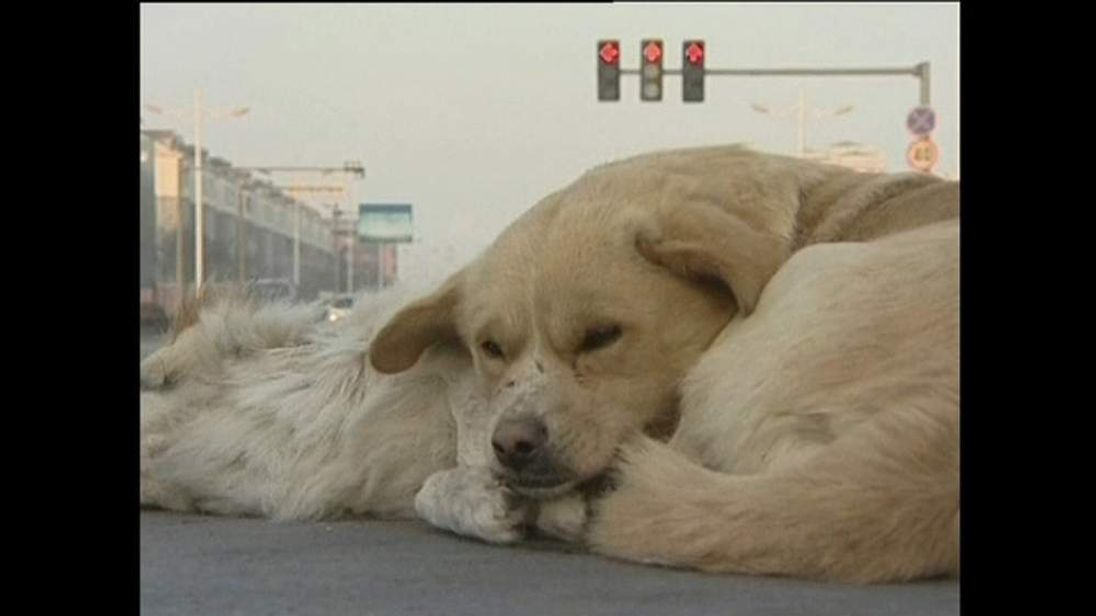Dog lies next to dead dog in China