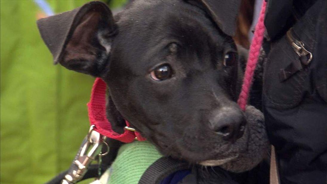 Dog saved from euthanasia in South Carolina