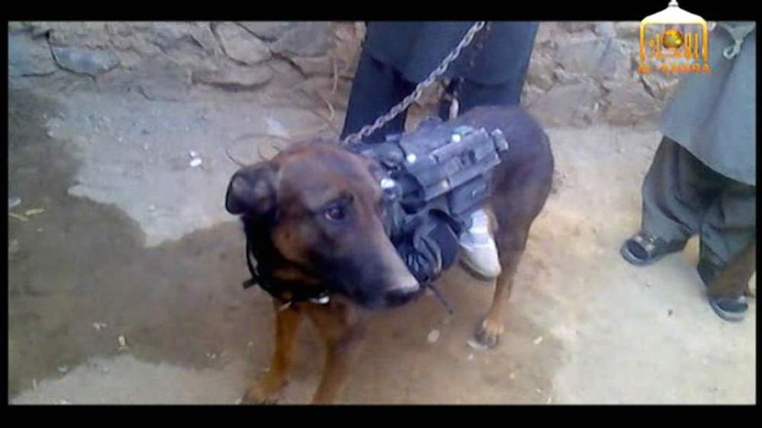 Afghan Taliban claim to have captured a dog belonging to the US military