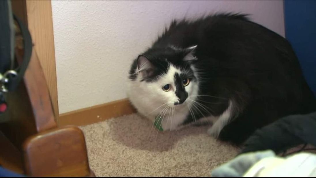 Oregon family terrorised by bad cat