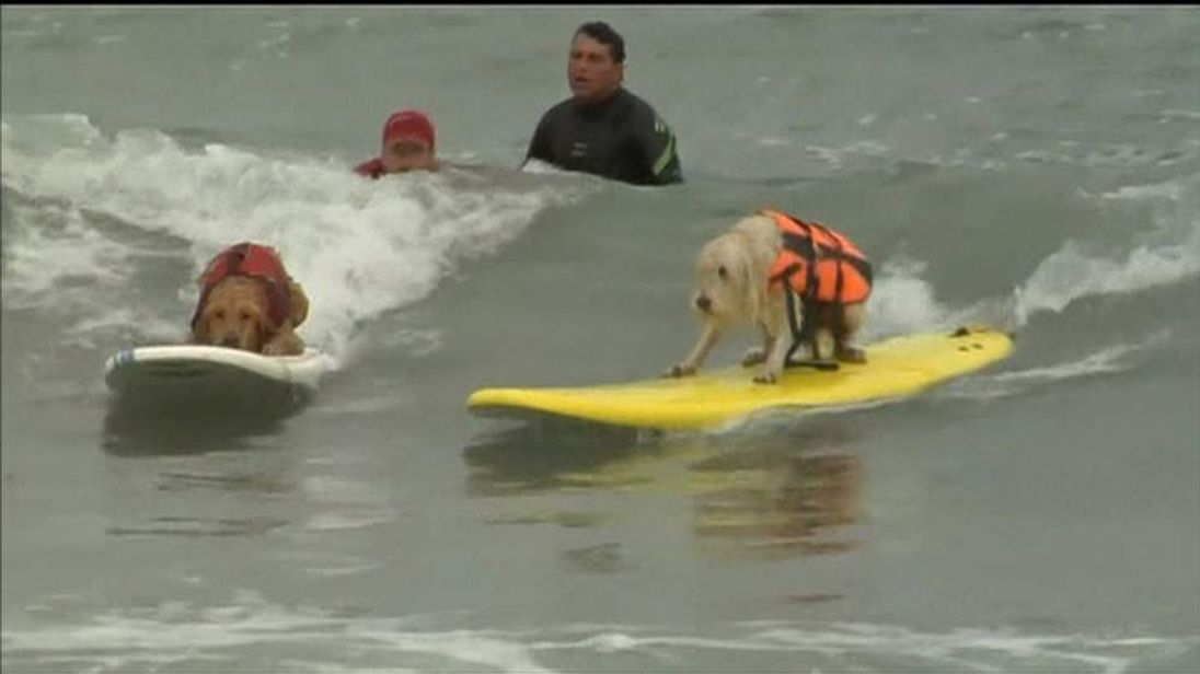A dog takes to the waves at the Dog Surfing Competition in California