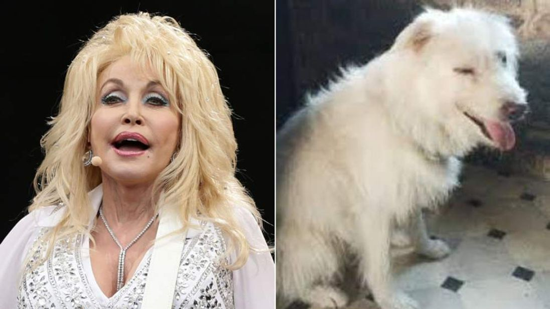 Dolly Parton adopts Glastonbury dog