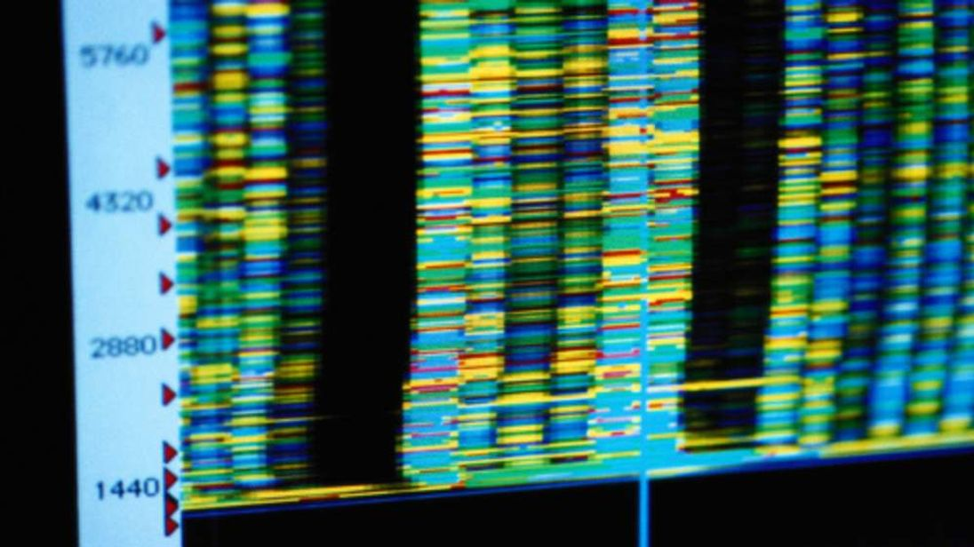 DNA configurations are shown on a computer screen. (File picture)