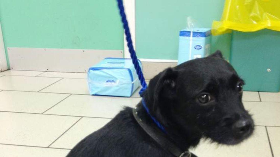 Dog stood guard over attack victim