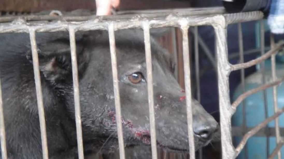 An increasingly powerful lobby has rallied against the dog festival in China