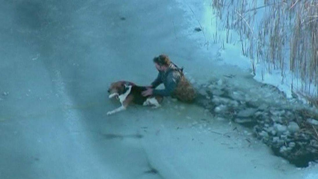 Dog Rescued On Lake Erie Michigan