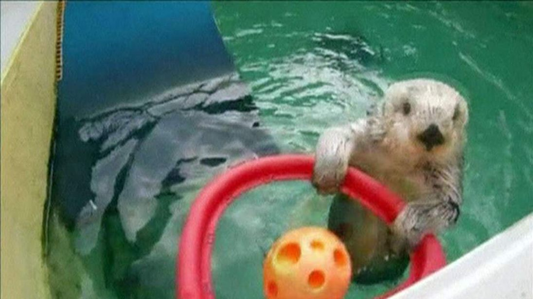 Eddie the otter in action