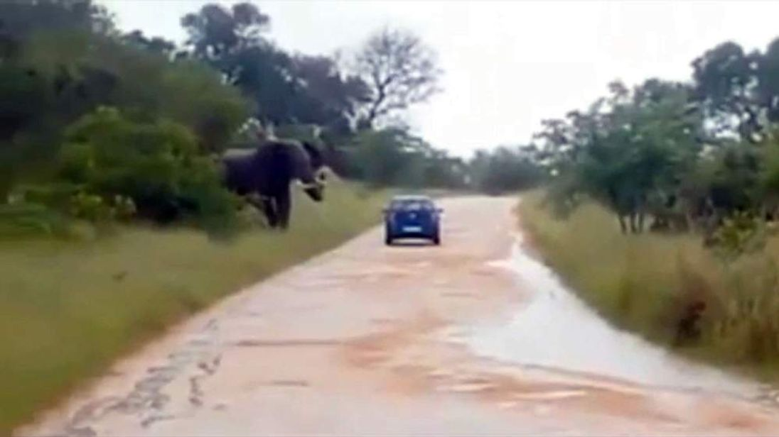 The elephant about to charge the car