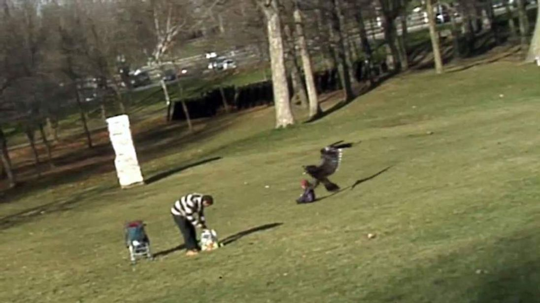 Eagle snatching child