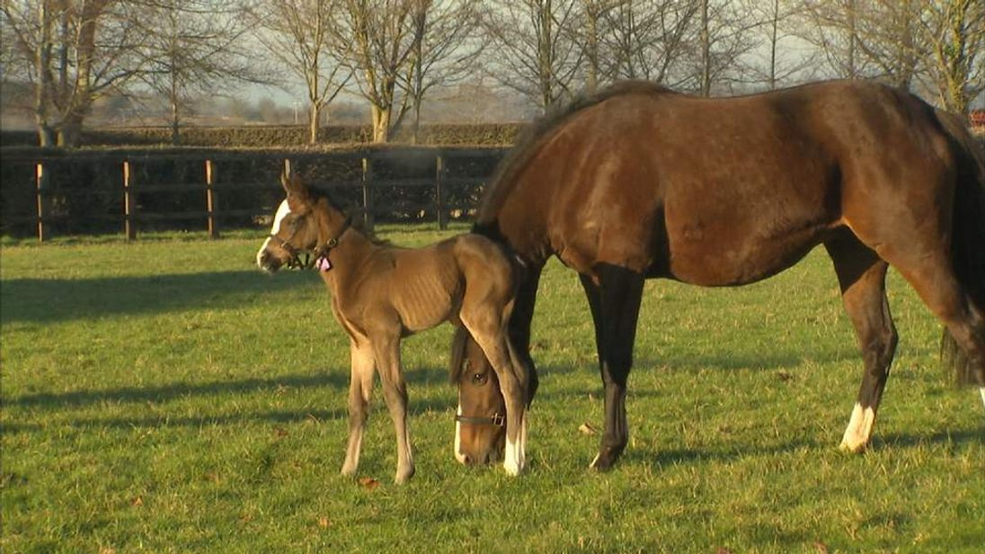 The first offspring of Frankel is shown to the world