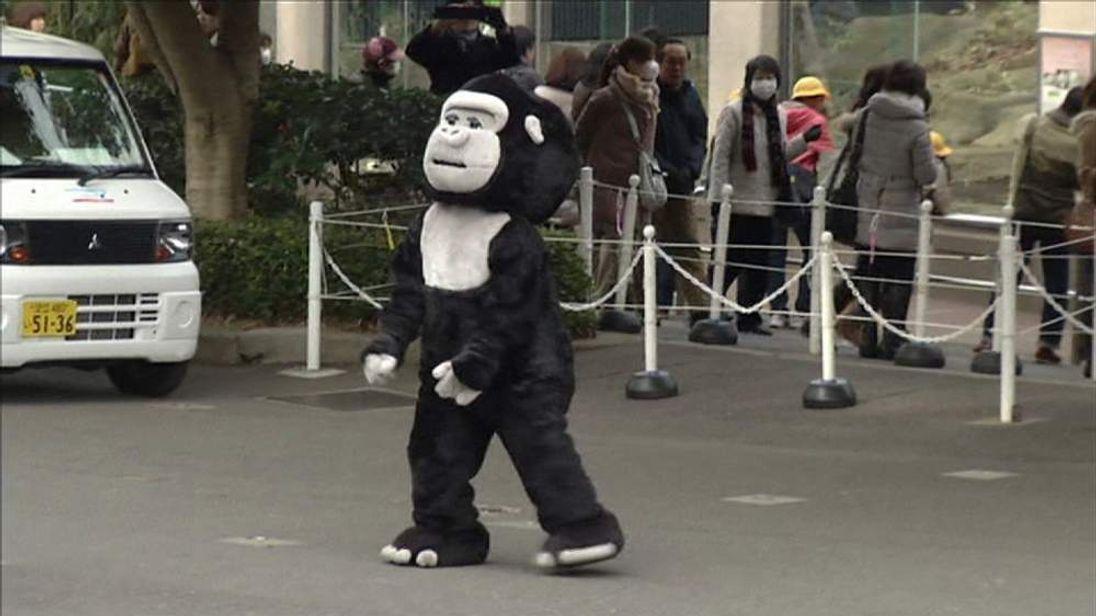 The gorilla in costume