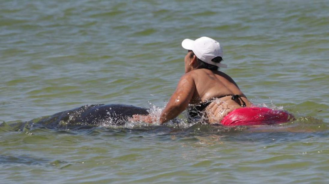 Manatee rider Ana Gutierrez (Pinellas County Sheriff's Office)