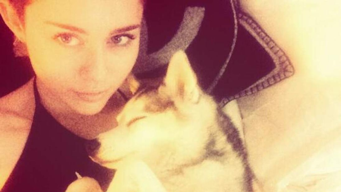 Miley Cyrus holds her adorable dog Floyd