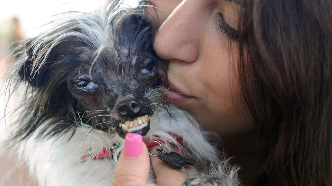 US ugliest dog contest