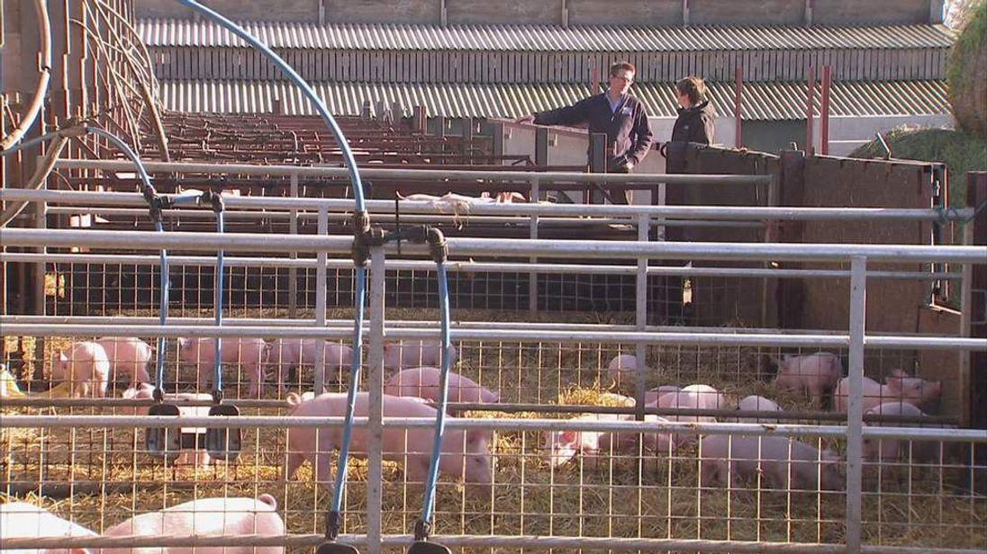Pig farmer Fergus Howie