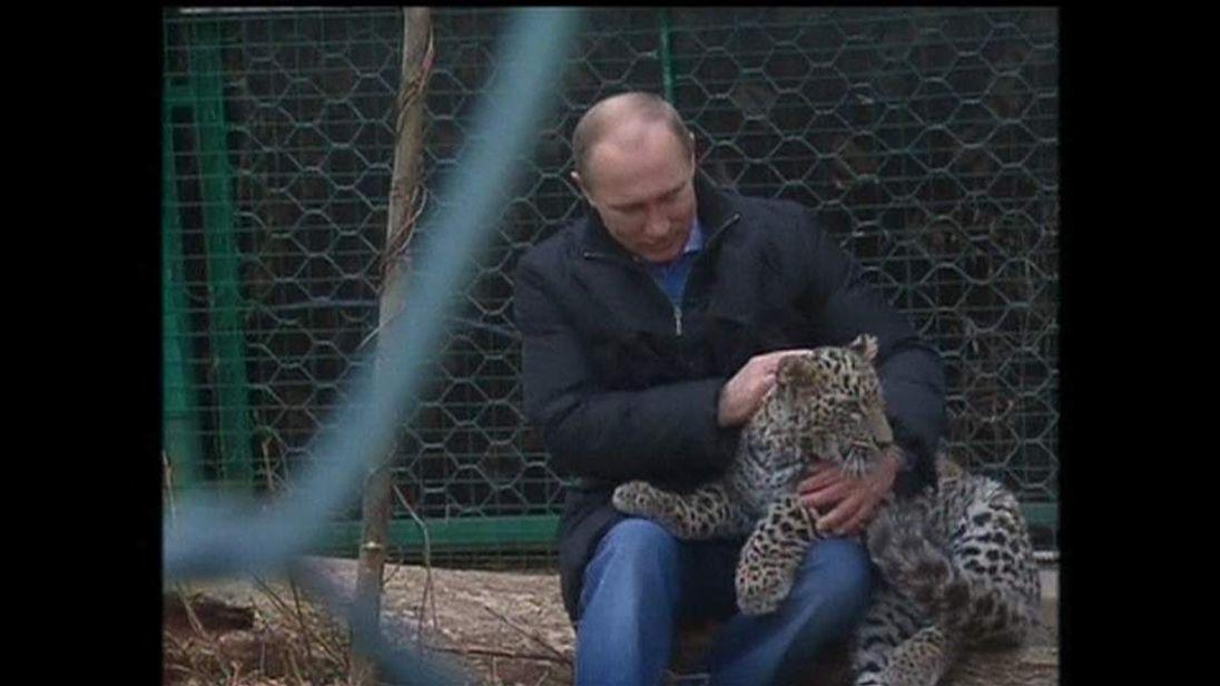 Russian President Putin at a leopard sanctuary in Sochi