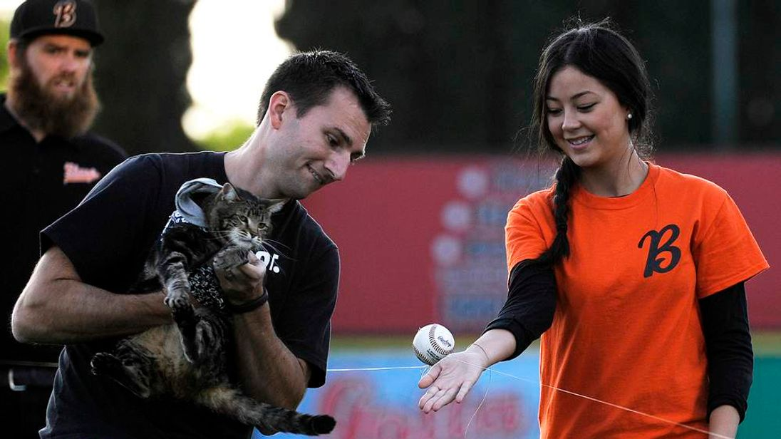 "Hero cat Tara with the help of her owner Triantafilo and team staff member Henry ""tosses"" the first pitch in Bakersfield"