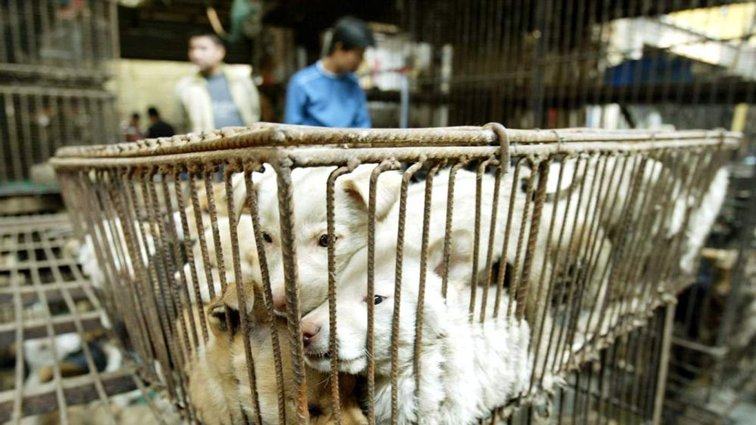 CHINESE VENDORS SELL DOGS AT A WILD ANIMAL MARKET IN GUANGZHOU.