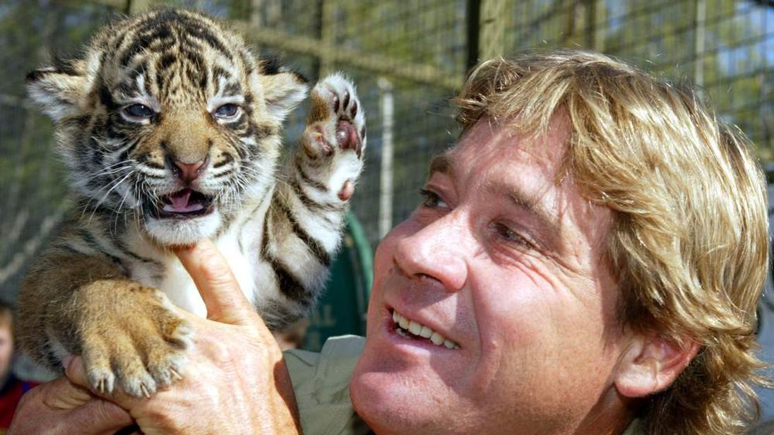 Steve Irwin holds a pure bred Sumatran tiger cub at Mogo Zoo south of..