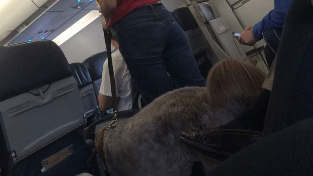 Plane diverted over dog mess on plane CREDIT: Chris Law