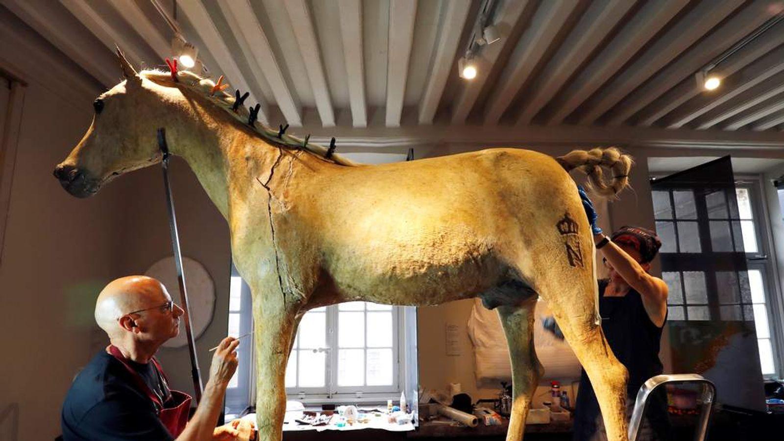 Napoleon S Stuffed Horse Gets Paris Makeover World News
