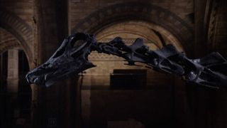 Dippy the Dinosaur at London's Natural History Museum