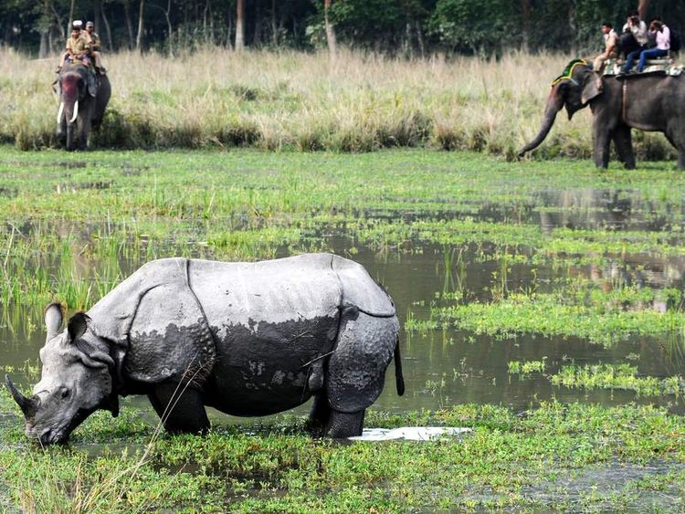 Tourists riding on elephants look at a one-horn rhinoceros