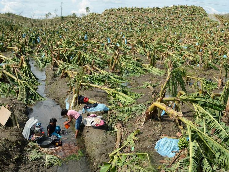 A mother and her daugther wash their clothes next to destroyed banana trees at a plantation in Monte Vista town