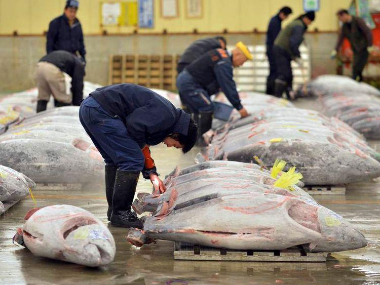 Record Tuna Auction