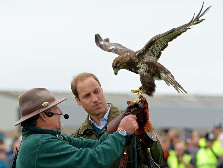 Prince William with hawk