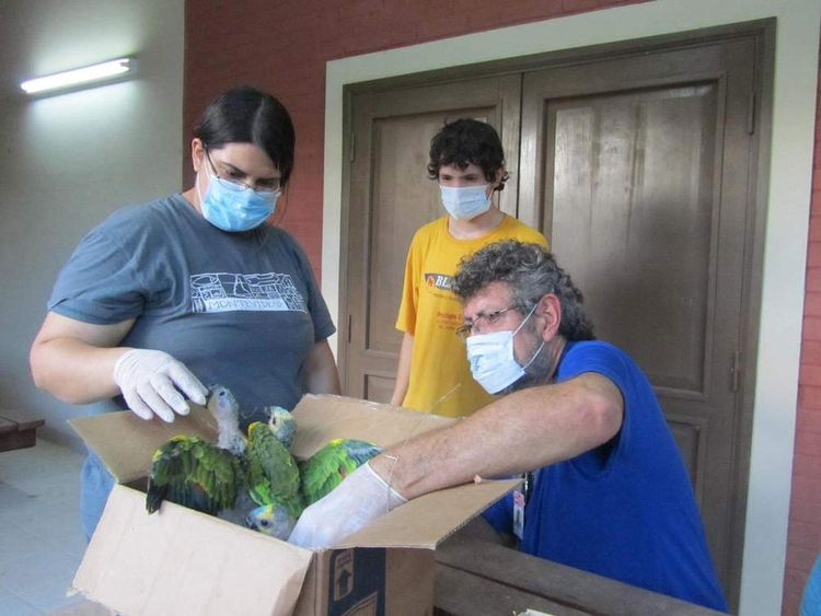 Paraguay Parrots Rescued By Police