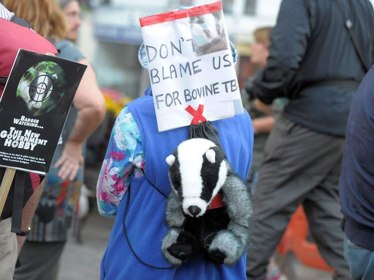 Anti-cull protesters in Minehead, Somerset