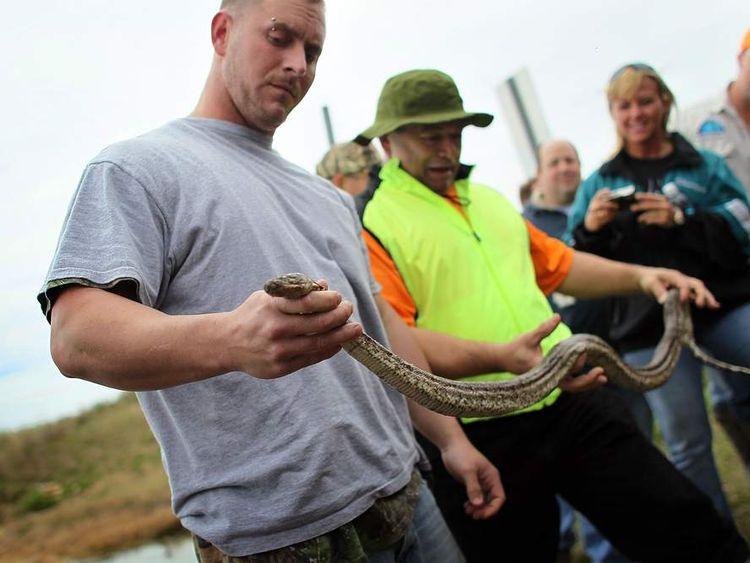 Florida Trains Hunters In Python Eradication catch a Burmese python