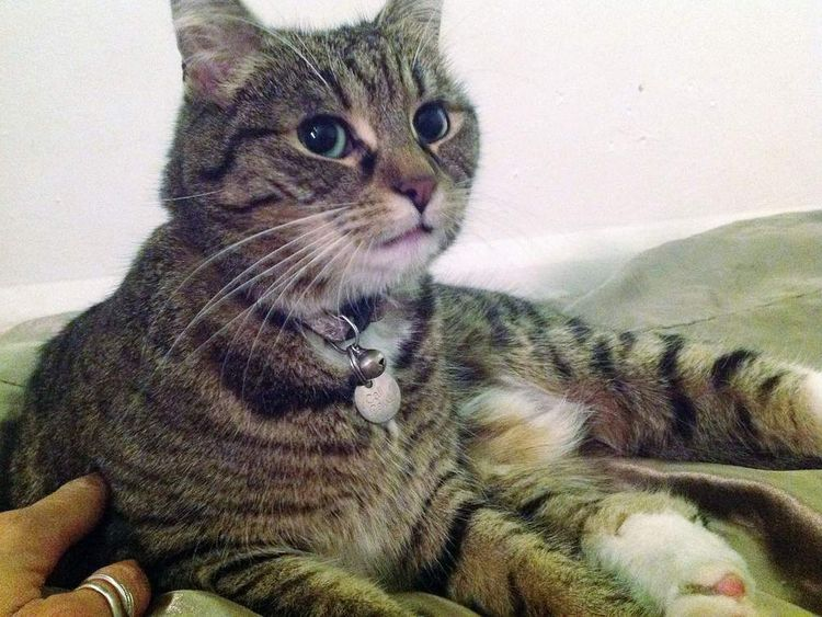 Chancellor's cat found