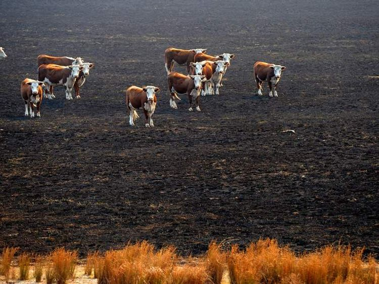 AUSTRALIA Wildfires 2