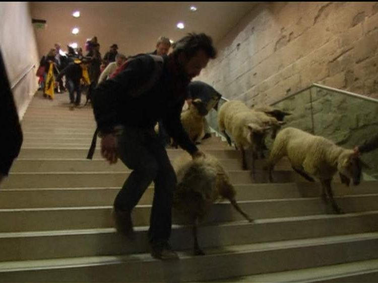Sheep in the Louvre