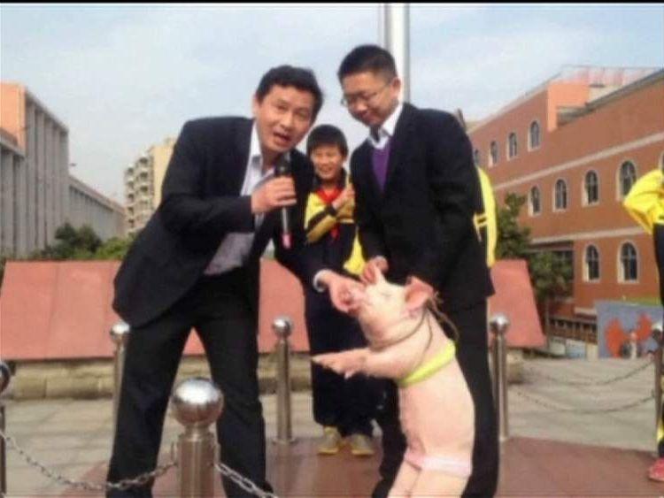 Teacher kisses pig
