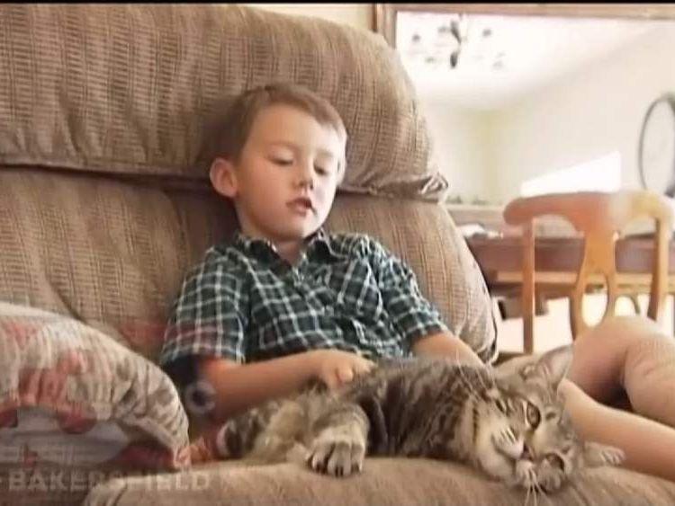 Jeremy Triantafilo Saved By Cat After Dog Attack