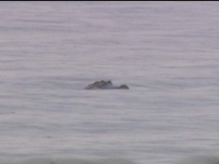 The alligator struck in Lake Toho