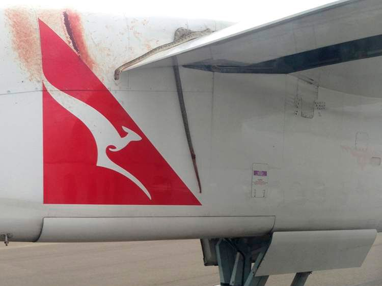 The dead python lies wedged on the wing of a Qantas passenger plan as it lands in Port Moresby