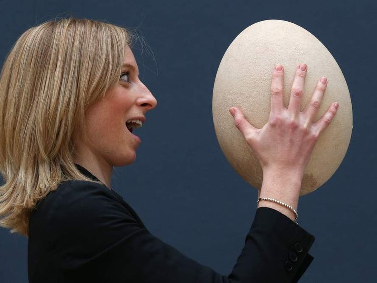 An employee at Christie's auction house examines a complete sub-fossilised elephant bird egg