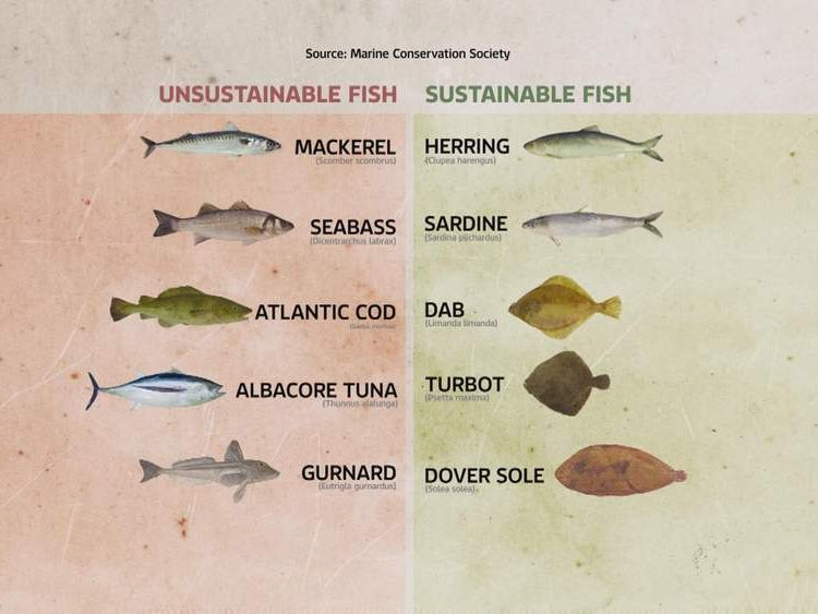 Unsustainable and sustainable fish