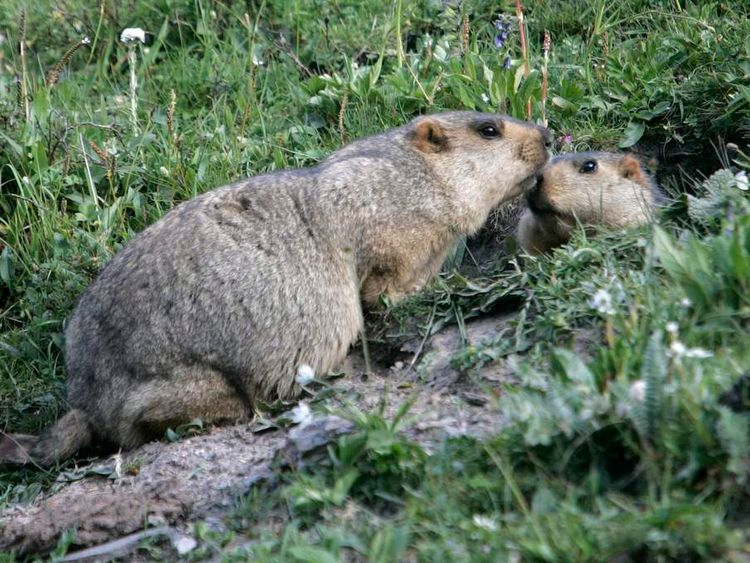 Two marmots photographed in Yushu, west China's Qinghai province