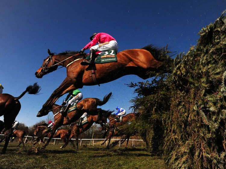 Horses in Grand National Mr Moonshine