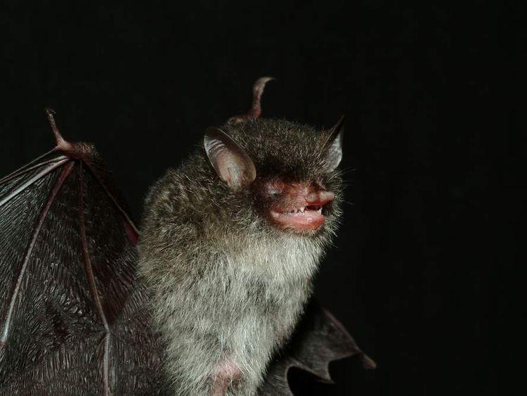 WWF New Species Found In Greater Mekong Region In 2011