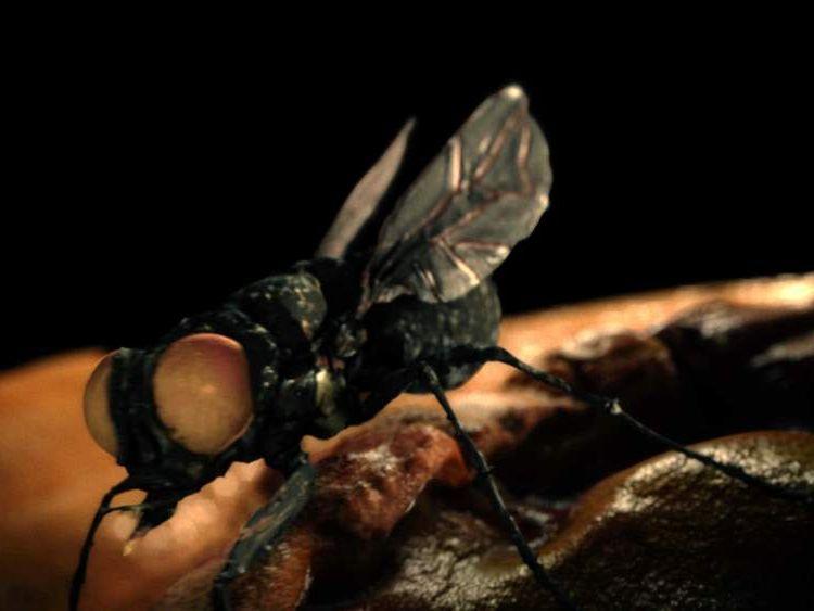 A New World screwworm fly had laid eggs inside her ear