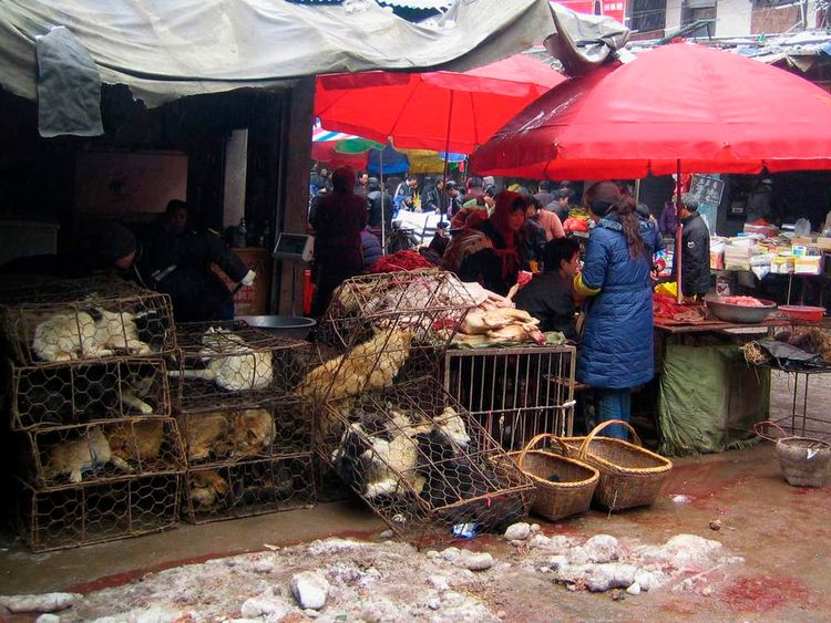 Caged dogs are displayed for sale at a butcher's stall in Chenzhou, China's southern Hunan province