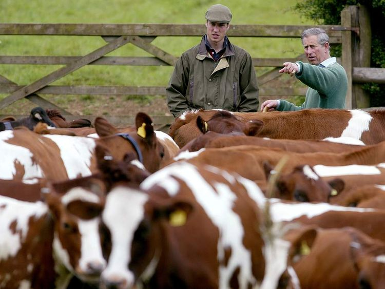 BRITAIN'S PRINCES CHARLES AND WILLIAM CHECK CATTLE ON THEIR FARM IN GLOUCESTERSHIRE.